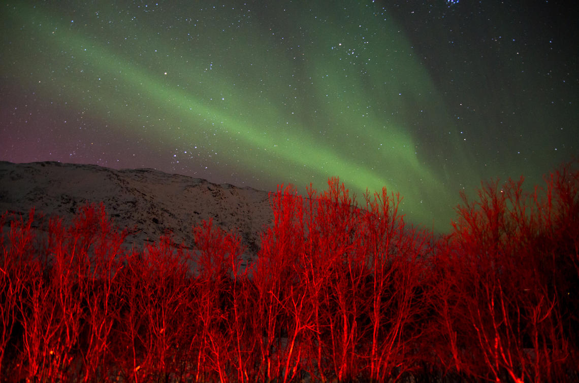 Green Aurora Borealis or Polar lights above a red colored bush